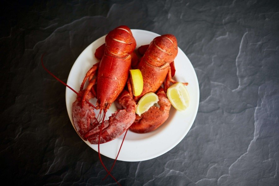 can dogs eat lobsters
