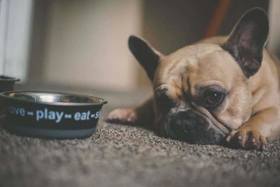 how long can dogs go without food